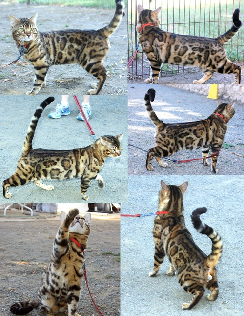 normal kitten behaviour