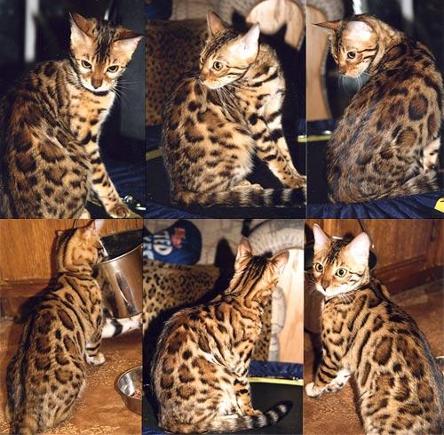 cat spay neuter clinic