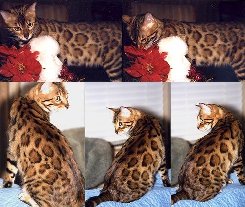 female cat suddenly aggressive